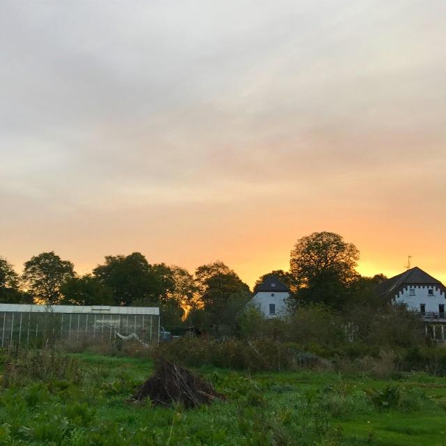 Vlierhof Community